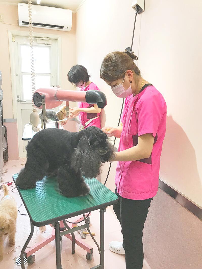 メープル動物病院のトリミングルーム