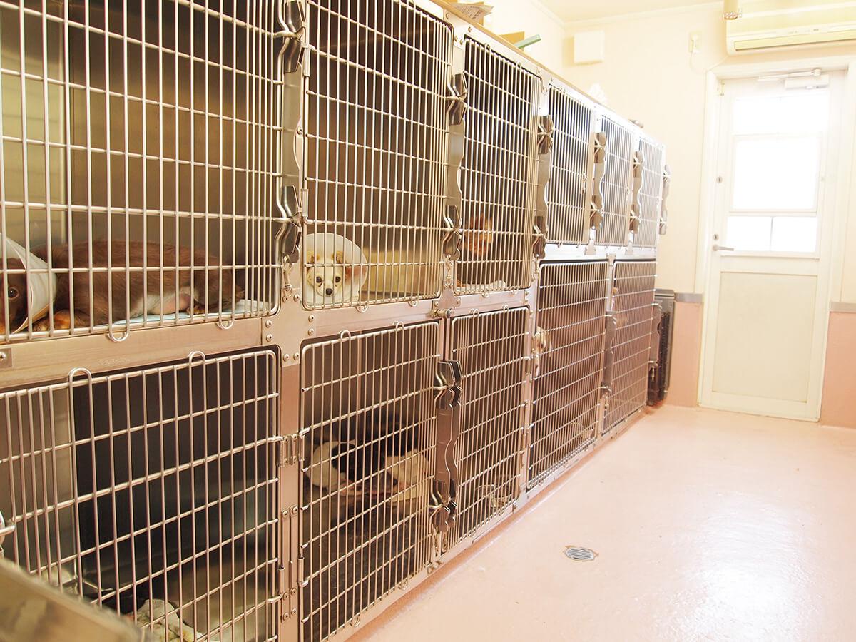 メープル動物病院の入院室