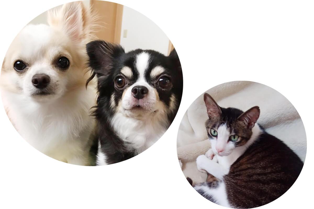 メープル動物病院のイヌと猫